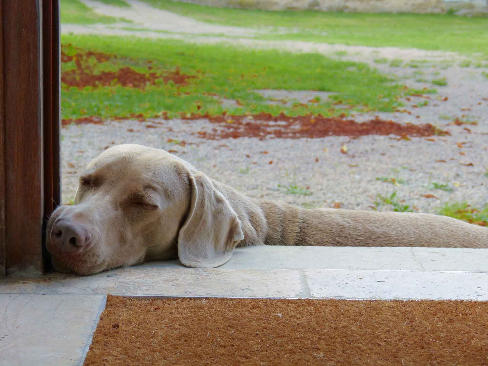 Photo d'Emma, le chien des propriétaires