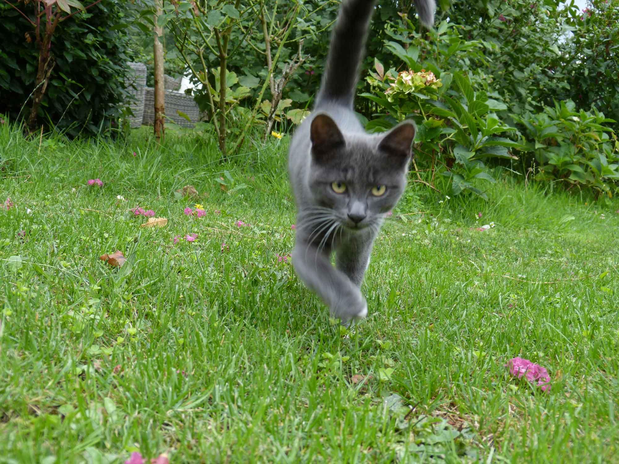 Photo de Suzanne, le chat des propriétaires